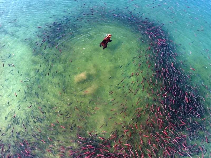 Фильм Шпиленков «Нерка. Рыба красная» завоевал первый приз на кинофестивале в Германии