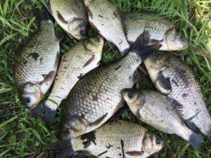 Комаричский рыбак отправится под суд за ловлю карасей