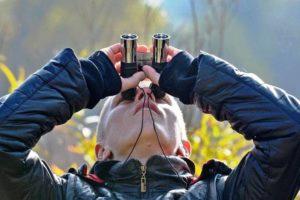 «Брянский лес» зовёт орнитологов-любителей к участию в Международных Днях наблюдений птиц