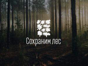 Брянская область присоединилась к всероссийской осенней акции «Сохраним лес»