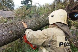 Из-за непогоды в Брянской области произошли отключения электричества в четырёх районах и двух городах