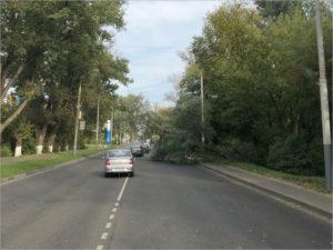 Порывы ветра валят деревья в Брянске: повреждены машины, перегорожены улицы