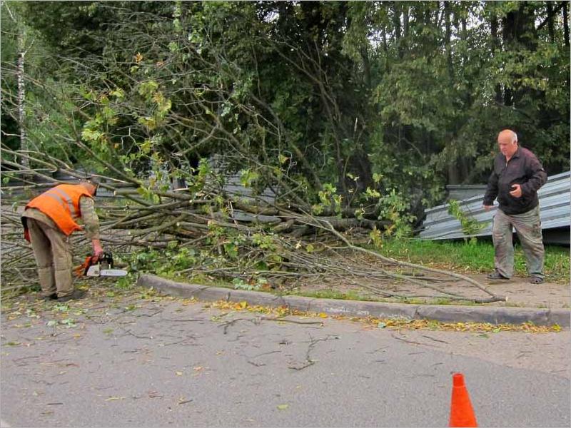 Власти Брянска отчитались о ликвидации последствий шквального ветра и дождя