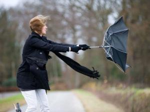 Брянских жителей предупредили о похолодании и порывистом ветре 4 мая
