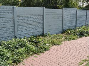 Брянским лицеистам перекрыли пути на заброшенные дачи