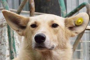 С начала года в Брянске чипировали и «вернули в среду обитания» 720 бездомных собак