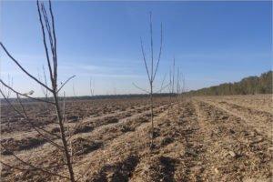 В Брасовском районе началась посадка стогектарного яблоневого сада