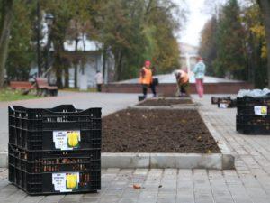 В Брянске высадят более 50 тысяч тюльпанов