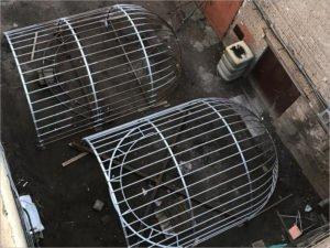 В Новозыбков в понедельник приедет «Птичья клетка Бёме»