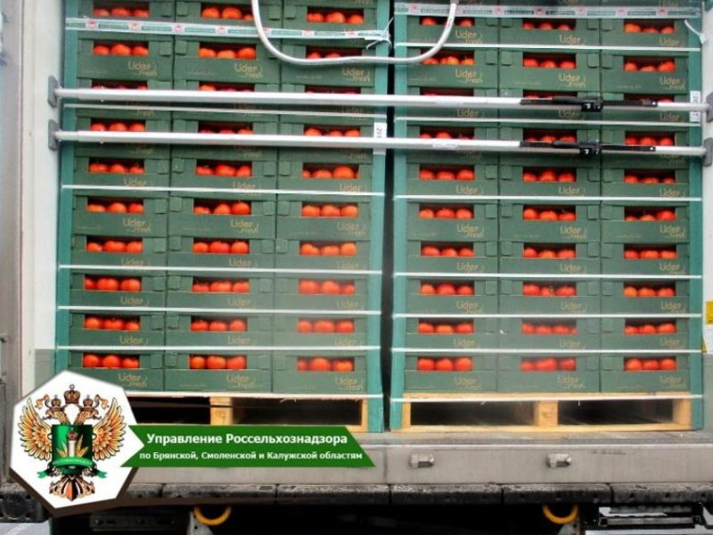 В Брянской области не пустили в Москву 19,5 тонн зараженных молью томатов