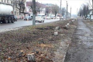 Брянские дорожники для шестиполосной улицы Ульянова начали пилить. Деревья
