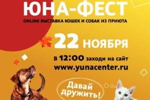 Онлайн «Юна-Фест»: домашние питомцы в добрые руки по всей стране с «кормовым довеском»