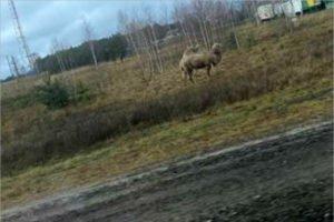 «Ноев ковчег» из Карачева переехал в Навлю, но по-прежнему ищет пропитание животным