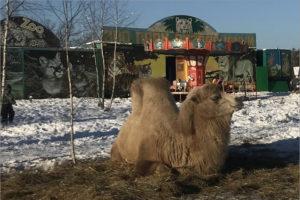 Эпопея «Ноева ковчега» в Брянской области продолжается. За зверинец снова взялись прокуратура и Россельхознадзор