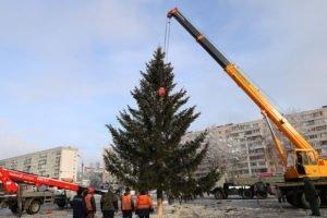 В Брянске установили первую живую новогоднюю ёлку