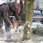 В Брянске установили первую живую новогоднюю ёлку. Недалеко от Самолета