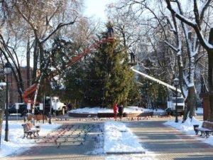 В Брянске наряжают главную городскую ёлку