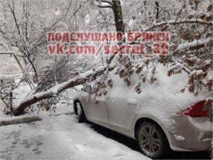 Снег с утра ломает деревья в Брянске