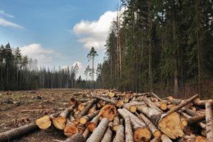 Бывший лесничий Навлинского лесничества, незаконно «срубивший» полмиллиона, пойдёт под суд