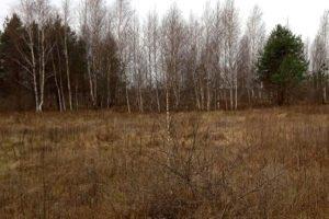 Гордеевские чиновники «зарастили» бурьяном более 170 га сельхозземель