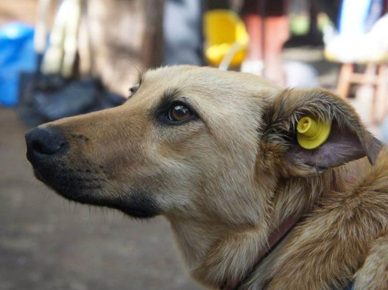 В Брянске удвоят средства на отлов и содержание бездомных собак. Пока без приюта