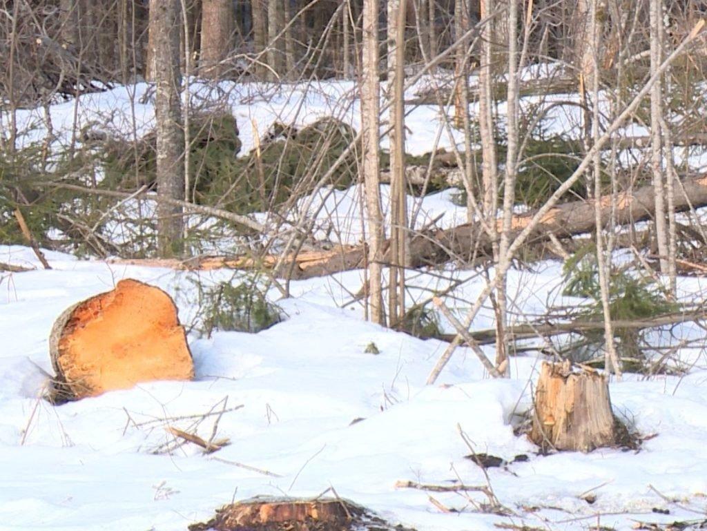 Брянская природоохранная прокуратура проверила арендаторов лесных угодий