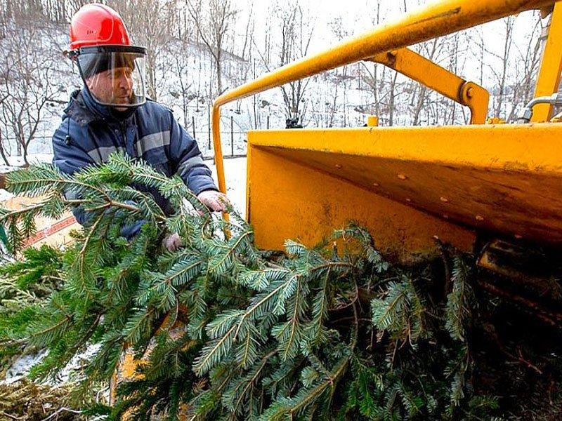 На карте «+1Город» появились пункты приёма новогодних ёлок для переработки