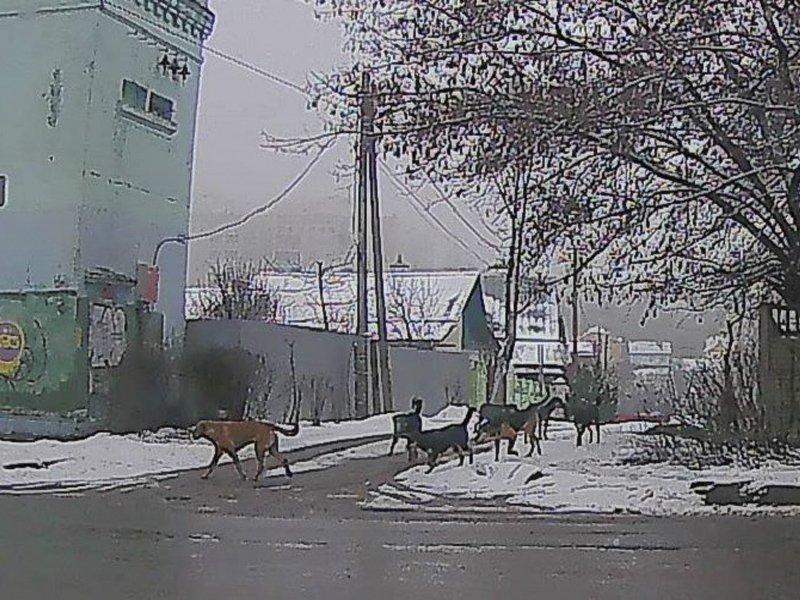 В Карачеве за два дня бродячие собаки покусали 8 человек. Горожане требуют от администрации решения проблемы