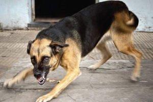 В Карачеве за два дня бродячие собаки покусали восьмерых человек. Горожане требуют от администрации решения проблемы