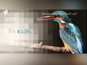 Заповедник «Брянский лес» представит фильм, «снятый» фотоловушками