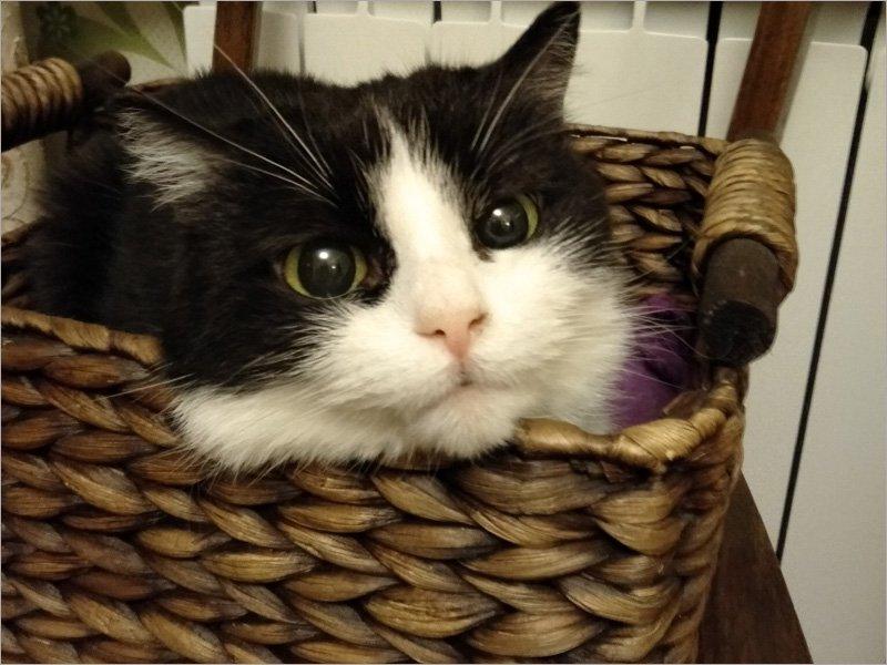 Топ-5 домашних животных жителей Брянской области возглавляют кошки