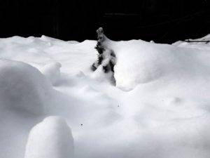 Толщина снежного покрова в Брянске превысила рекорд 2010 года