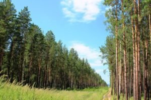 В Брянской области подумают о благоустройстве пригородных лесов