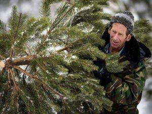Красногорский «лесоруб», незаконно срубивший полтора десятка сосен, ответит по закону