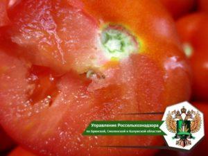 В Брянской области развернули 20 тонн испорченных томатов