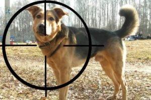 Брянский «самоделкин» пугал собак из пистолета собственного изготовления