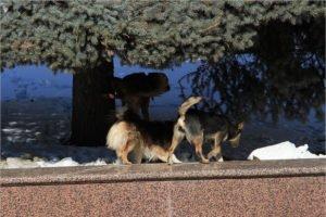Законопроект о снятии запрета на убийство бездомных животных отзывается из Госдумы – «ЕР»