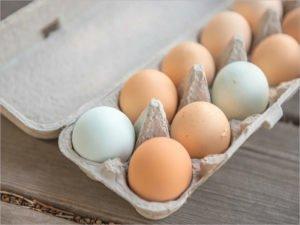 Российские производители мяса птицы и яиц договорились о сдерживании цен