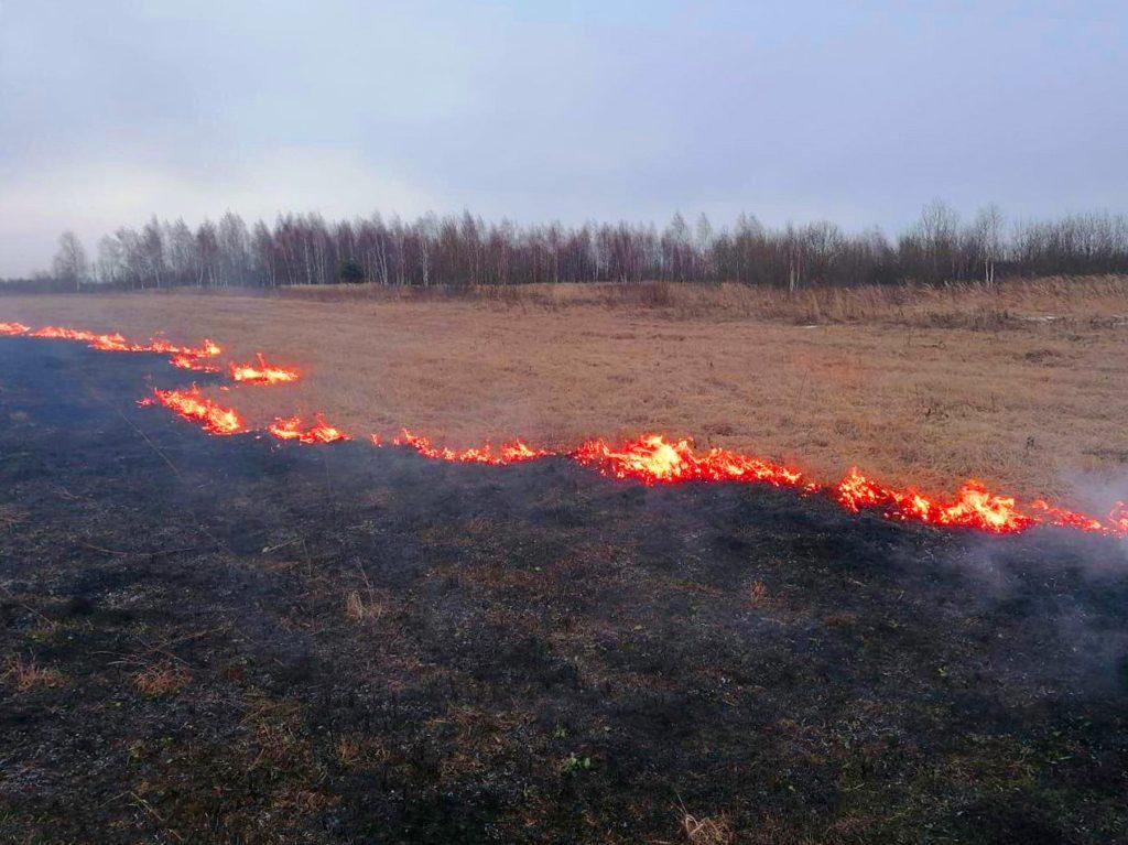 В Брянской области зафиксированы первые случаи поджога сухой травы