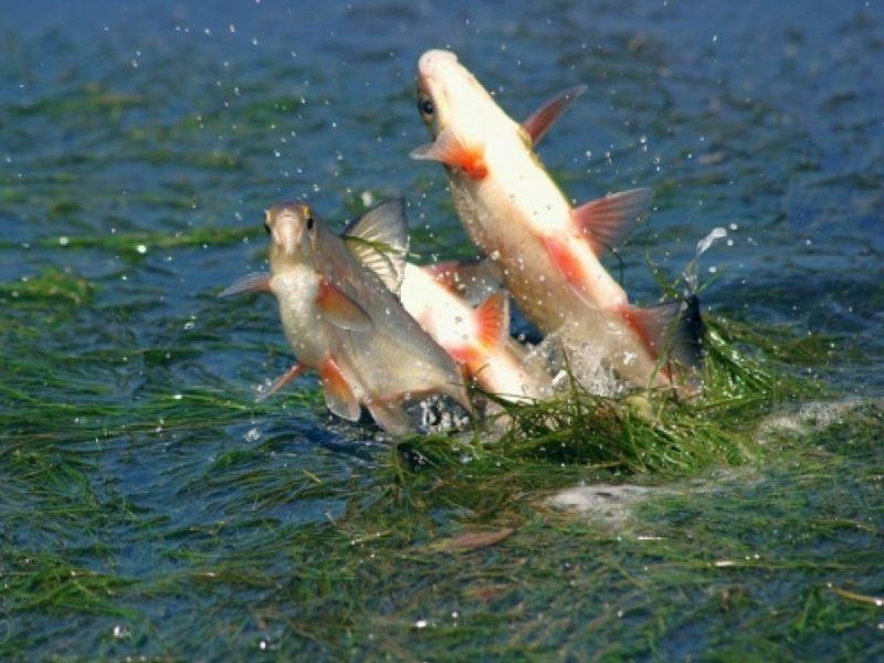 С 1 апреля в Брянской области объявлен запрет на рыбную ловлю