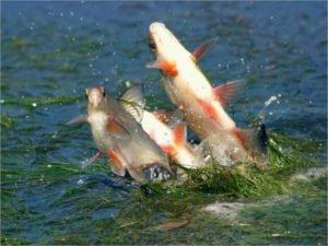 С 22 марта на реках и озёрах Брянской области запрещается рыбная ловля