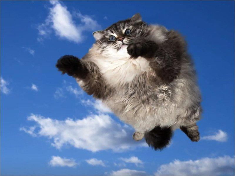 «Сильный ветер поднял в воздух стаю котов в центре Москвы»: 13 лет назад опубликована самая весенняя новость за брянским авторством