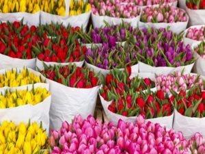 Россельхознадзор проверил 450 тысяч цветов, приехавших в Брянск к 8 марта