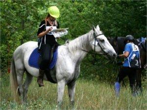 В Брянске впервые в истории пройдут соревнования по конному туризму