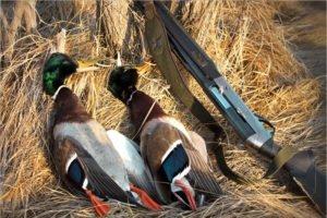 Весенняя охота в Брянской области начнётся с утра 27 марта