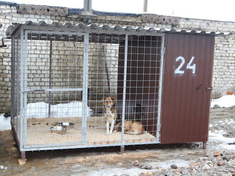 Приют для бродячих собак в Брянске начал принимать первых постояльцев