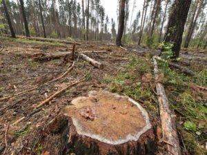 Житель Дубровского района незаконно нарубил деревьев от имени покойного отца