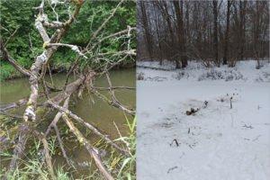 Брянские туристы расчищают русло Снежети для нормального сплава на байдарках