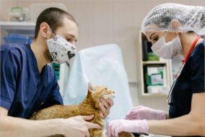 В России зарегистрирована первая в мире вакцина против коронавируса для котов