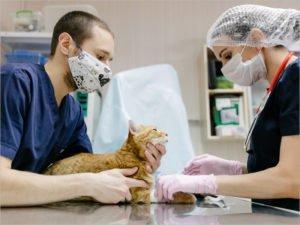 В Брянской области можно привить домашних животных от коронавируса